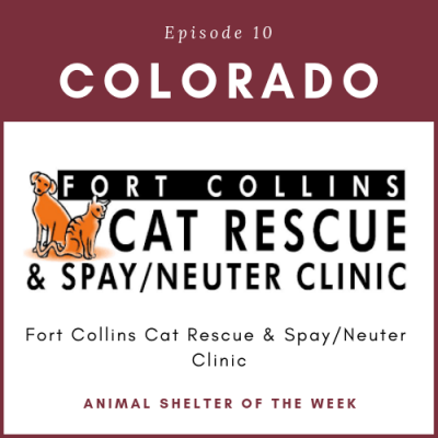 Animal Shelter of the week – Episode 10 – Fort Collins Cat Rescue in Colorado