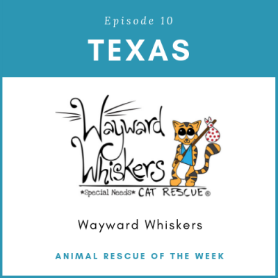 Animal Rescue of the Week: Episode 10 – Wayward Whiskers