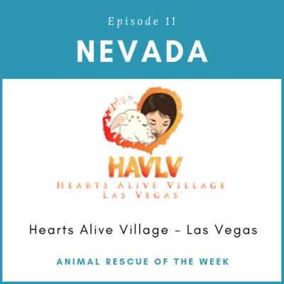 Animal Rescue of the Week: Episode 11 – Hearts Alive Village