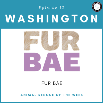 Animal Rescue of the Week: Episode 12 – FUR BAE in Washington