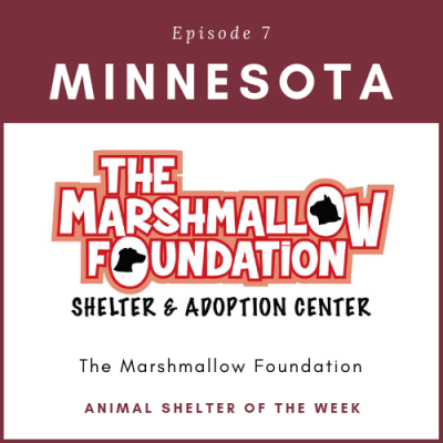 Animal Shelter of the Week – Episode 7 – The Marshmallow Foundation in Minnesota