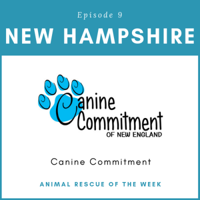 Animal Rescue of the Week: Episode 9 – Canine Commitment in New Hampshire