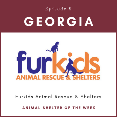Animal Shelter of the Week – Episode 9 – Furkids in Georgia