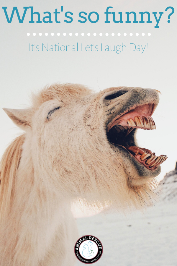 National Let's Laugh Day