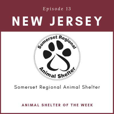 Animal Shelter of the Week – Episode 13 – Somerset Regional Animal Shelter in New Jersey