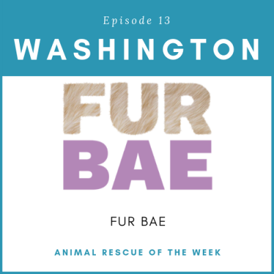 Animal Rescue of the Week: Episode 13 – FUR BAE in Washington