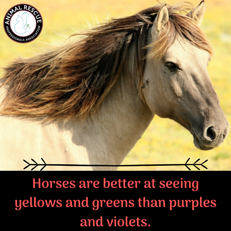 Horses ARE NOT Colorblind