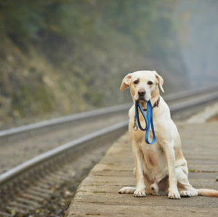 lost dog on railroad tracks
