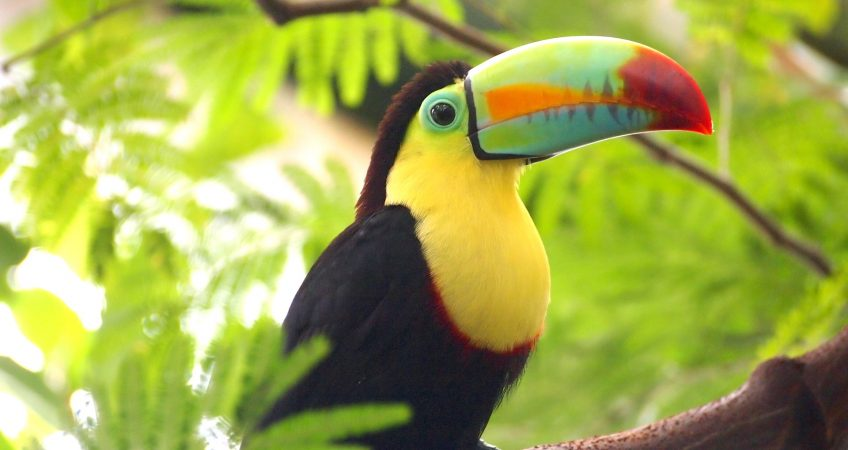 Toucans Curl Into Little Balls When They Sleep