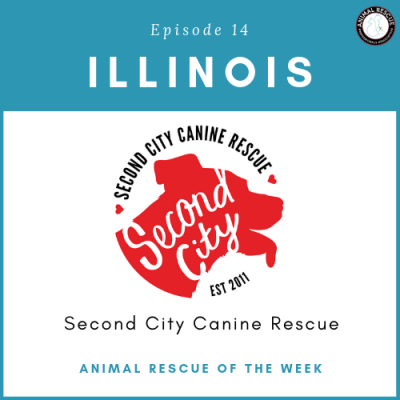 Animal Rescue of the Week: Episode 14 – Second City Canine Rescue in Illinois