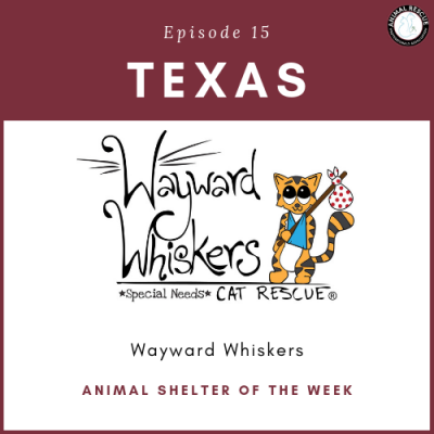 Animal Shelter of the Week: Episode 15 – Wayward Whiskers in Texas