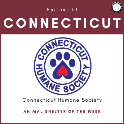 Animal Shelter of the Week: Episode 19 – Connecticut Humane Society in Connecticut