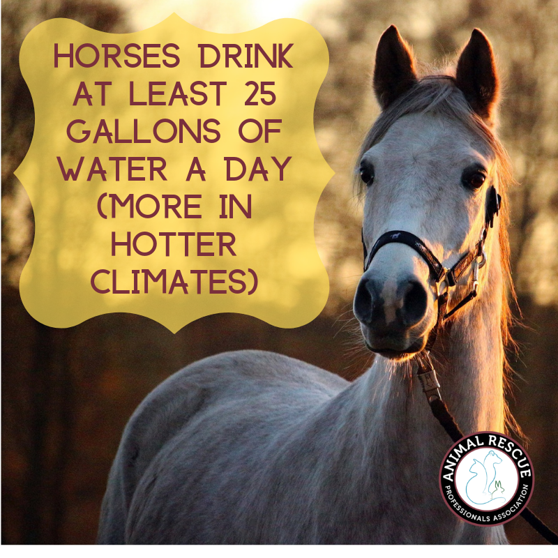 Horses drink at least 25 gallons of water a day (more in hotter climates)
