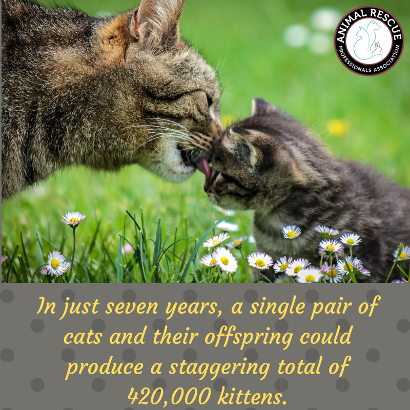 In just seven years, a single pair of cats and their offspring could produce a staggering total of 420,000 kittens.