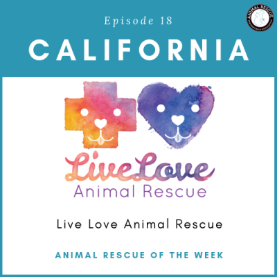 Animal Rescue of the Week: Episode 18 – Live Love Animal Rescue