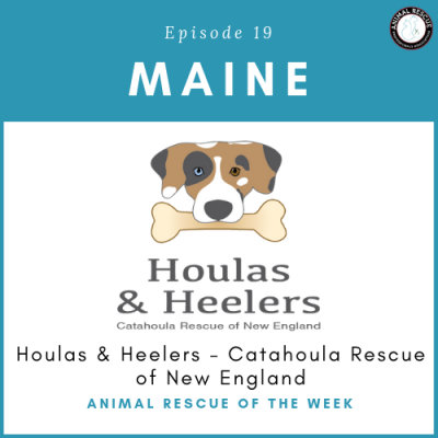 Animal Rescue of the Week: Episode 19 – Catahoula Rescue