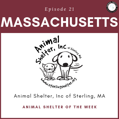 Animal Shelter of the Week: Episode 21 – Animal Shelter, Inc in Massachusetts