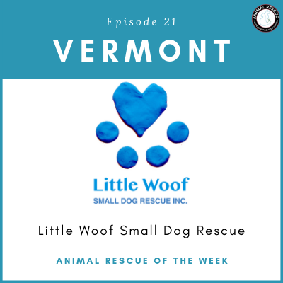 Animal Rescue of the Week: Episode 21 – Little Woof Small Dog