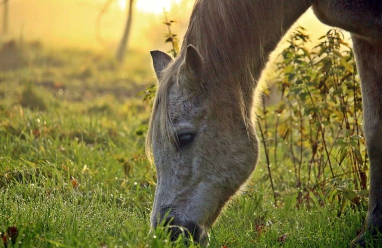Do you know how to measure a horses height?