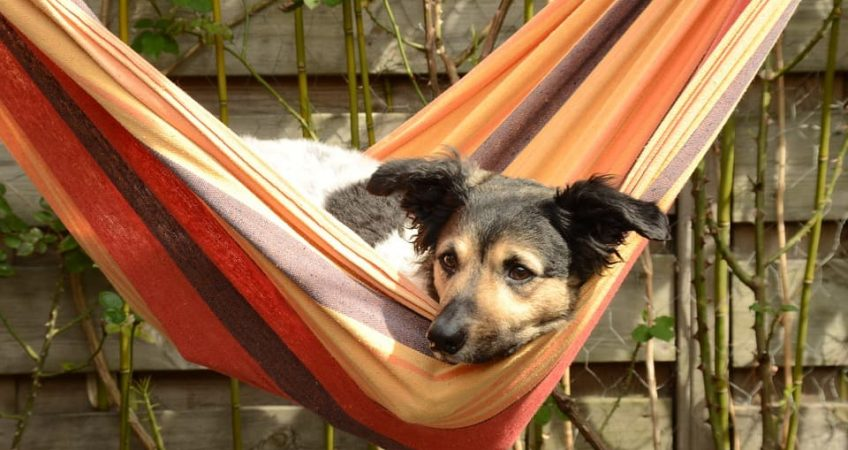 National Hammock Day