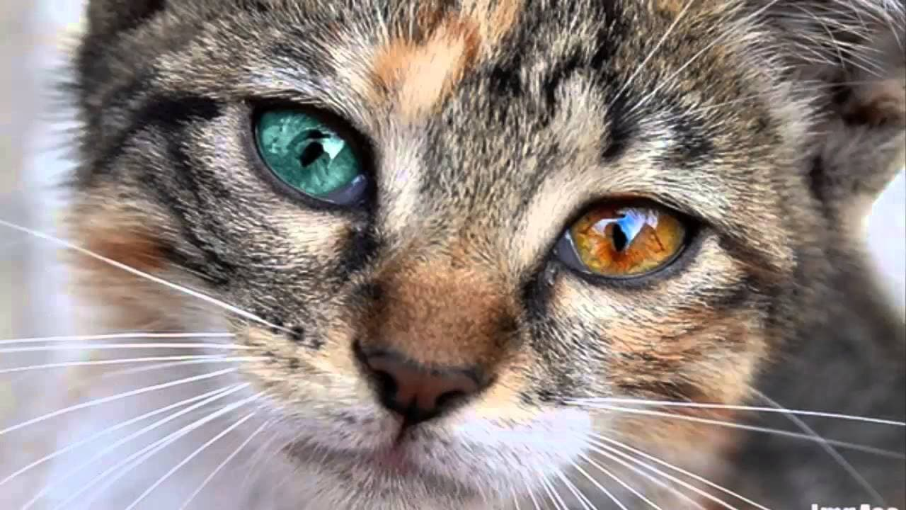 National Different Colored Eyes Day Animal Rescue Professionals Association