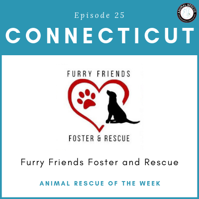 Animal Rescue of the Week: Episode 25 – Furry Friends Foster and Rescue in Connecticut