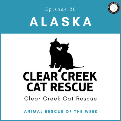 Animal Rescue of the Week: Episode 26 – Clear Creek Cat Rescue in Alaska