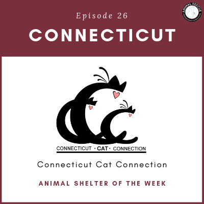 Animal Shelter of the Week: Episode 26 – Connecticut Cat Connection in Connecticut
