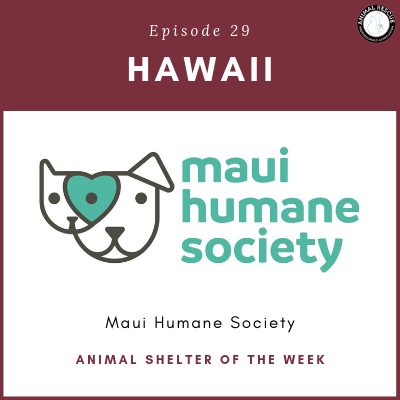 Animal Shelter of the Week: Episode 29 – Maui Humane Society in Hawaii