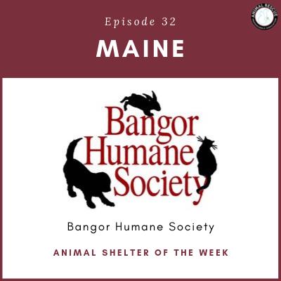 Animal Shelter of the Week: Episode 32 – Bangor Humane Society