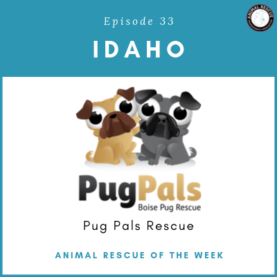 Animal Rescue of the Week: Episode 33 – Pug Pals Rescue