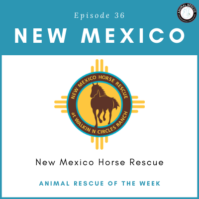 Animal Rescue of the Week: Episode 36 – New Mexico Horse Rescue