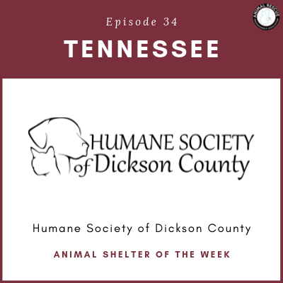 Animal Shelter of the Week: Episode 34 – Humane Society of Dickson County