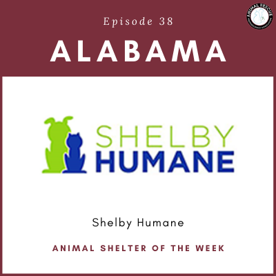 Animal Shelter of the Week: Episode 38 – Shelby Humane Society
