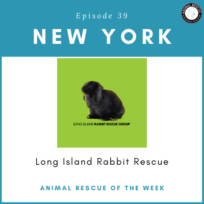 Animal Rescue of the Week: Episode 39 – Long Island Rabbit Rescue