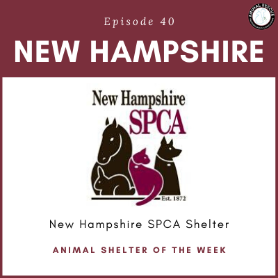 Animal Shelter of the Week: Episode 40 – New Hampshire SPCA Shelter