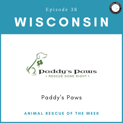 Animal Rescue of the Week: Episode 38 – Paddy's Paws