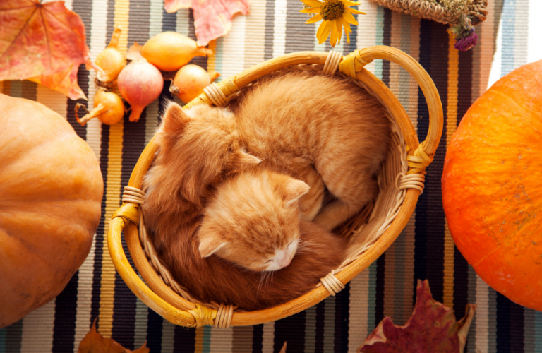 How to Have a Pet-Friendly Thanksgiving
