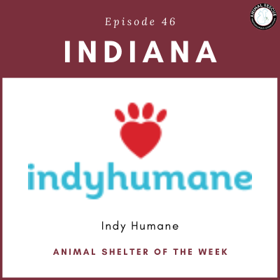Animal Shelter of the Week: Episode 46 – Indy Humane