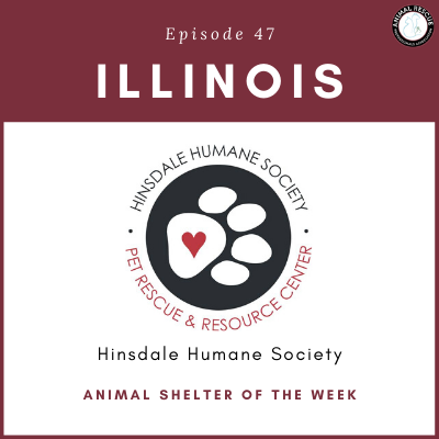 Animal Shelter of the Week: Episode 47 – Hinsdale Humane Society