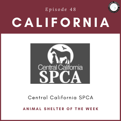 Animal Shelter of the Week: Episode 48 – Central California SPCA