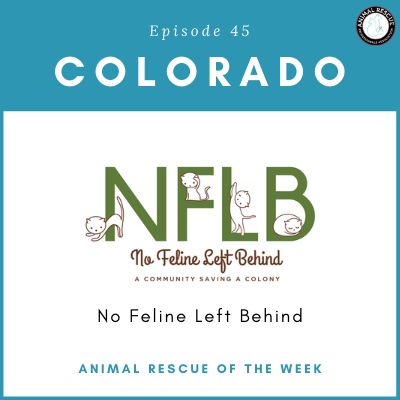 Animal Rescue of the Week: Episode 45 – No Feline Left Behind