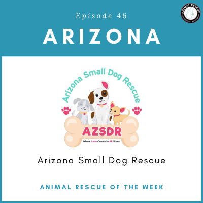 Animal Rescue of the Week: Episode 46 – Arizona Small Dog Rescue