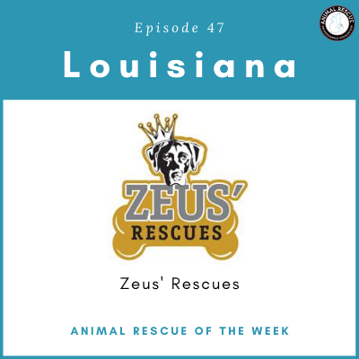 Animal Rescue of the Week: Episode 47 – Zeus' Rescues