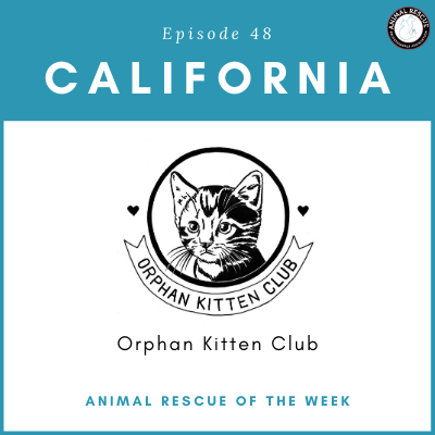 Animal Rescue of the Week: Episode 48 – Orphan Kitten Club