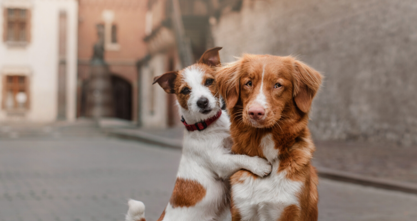 National Make a Friend Day: How to Help Your Dog Make Friends