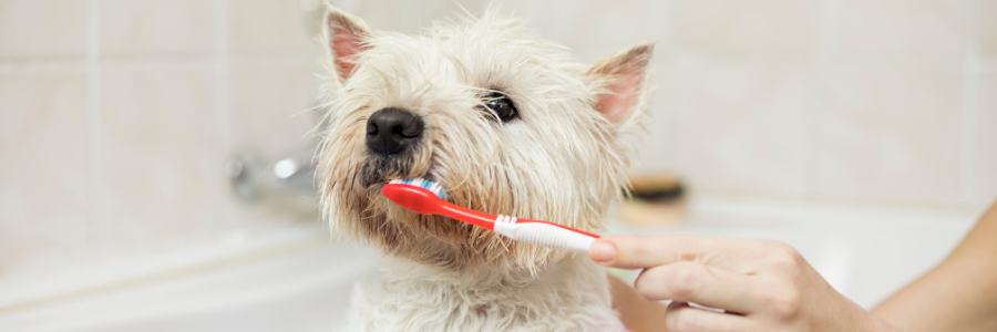 National Toothache Day: Does Your Pet Have a Toothache?