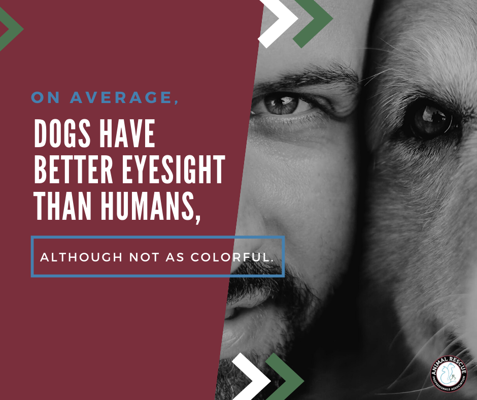 dogs have better eyesight than humans