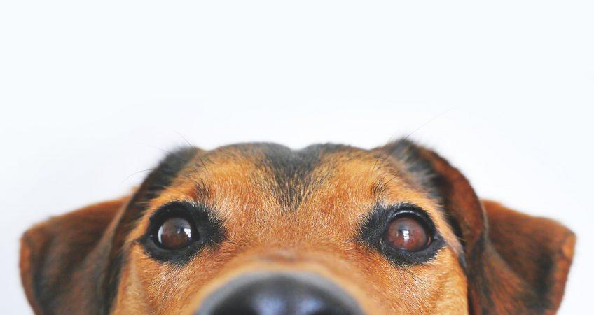 The World Through a Dog's Eyes