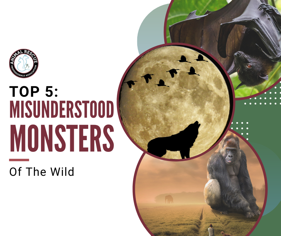 Top 5: Misunderstood Monsters of the Wild